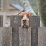 Brighton fence company - pet security