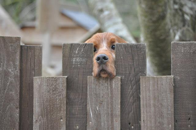 Brighton fence company - pet security