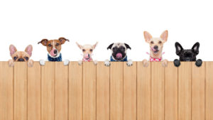 To keep your pets safe, consult with Metro Fence Company