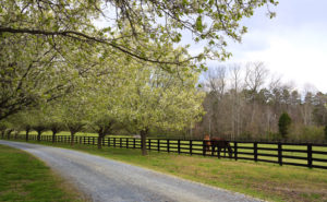 , Split Rail Fencing Products, Metro Fence, Metro Fence
