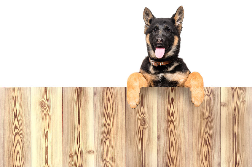 talk to an Arvada fence company for ways to keep your animals safe and secure