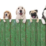 residential fencing Denver pros can help keep your pets secure