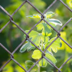 Arvada chain link fencing