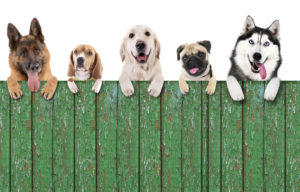 residential fence company offers fences that protects pets