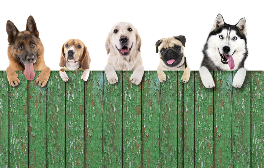 residential fence company offers fences that protectss pets