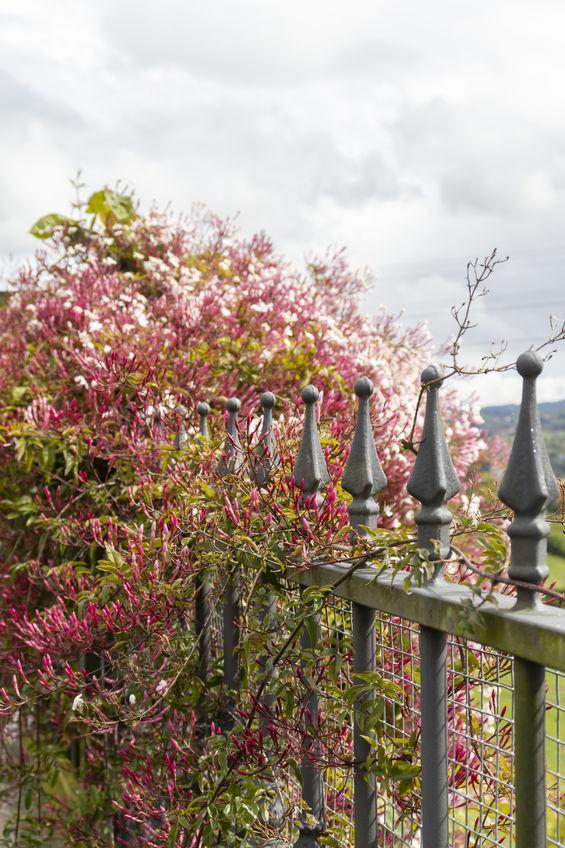 ornamental iron fence Denver