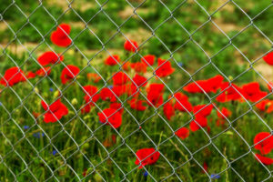 Chain link Thornton fence company